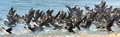 Great Cormorant Lake in northwestern Mongolia Royalty Free Stock Photo