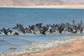 Great Cormorant Lake in northwestern Mongolia Royalty Free Stock Photo