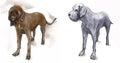 Great Dane (German Mastiff) - An hand drawn vector illustration