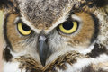 Great Horned Owl Eyes Royalty Free Stock Photo