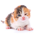 Great kitten young on white background Stock Images
