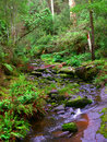 Great otway national park calm stream in the rainforests of the of southern victoria australia Stock Images
