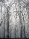 Great Smoky Mountains Forest Wintry Scene. Royalty Free Stock Photo