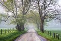 Great smoky mountains national park cades cove foggy country road in early morning during the spring season dogwood bloom Royalty Free Stock Photography