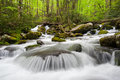 Great smoky mountains national park roaring fork cascade is a vibrant stream originating on the northern slopes of mount le conte Royalty Free Stock Photo