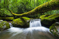 Great smoky mountains national park roaring fork motor nature trail a small cascade flows underneath a fallen log along just Stock Images