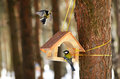Great tit sitting bird feeder winter park Royalty Free Stock Photos