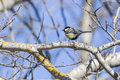 Great tit sitting branch forest halden municipality picture shot one day february Stock Photos