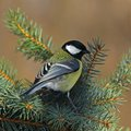 Great tit on a sunny branch Stock Images