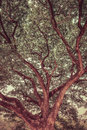 Great tree top creating a lush shade in vintage color Royalty Free Stock Photos