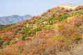 Great wall in autumn photoed in badaling of beijing Stock Images