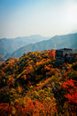 Great wall of china the best view the that fulfill with autumn leaves scene Stock Image