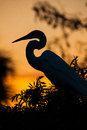 Great white heron in silouette profile to left Royalty Free Stock Image