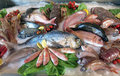 Great white sea bream many saltwater fish in the italian restaur fresh fridge of seafood restaurant southern italy Stock Photography