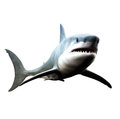 Great white shark swimming Royalty Free Stock Photo