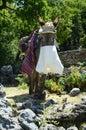 Greece, Crete, donkey Royalty Free Stock Photo