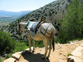 Greece, Crete, mule in mountain Royalty Free Stock Photos