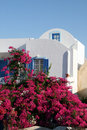 Greece, Santorini Bougainvillea House Stock Image