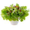 Greek salad in a pot for houseplants. White background. Royalty Free Stock Photo