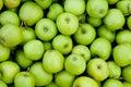 Greem apples Stock Photo