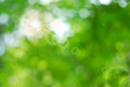 Greem leaves bokeh with sun ray and flare Royalty Free Stock Images