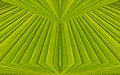 Green abstract background from leaf pattern palm Stock Photos