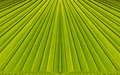 Green abstract background from leaf pattern palm Stock Photo