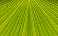Green abstract background from leaf pattern palm Stock Image