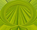 Green abstract background from leaf pattern palm Royalty Free Stock Photography