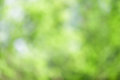 Green Abstract Forest Nature Background Royalty Free Stock Photo