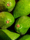 Green advacado background of avocados fresh fruit several Royalty Free Stock Photo