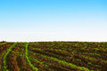 Green agricultural sow field and blue sky Royalty Free Stock Photos