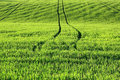Green agriculture field Stock Photo