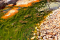 Green alga in acidic river andalusia spain Stock Image