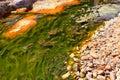 Green alga in acidic river andalusia spain Stock Image