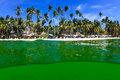 Green algae bloom on a tropical sea algal in ocean turning the normally blue to bright Royalty Free Stock Images