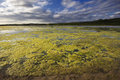 Green algae growing on river Stock Photography