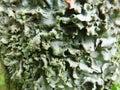Green. Algae. Lichens. Moss. Tree Bark. Texture. Close-Up. Background