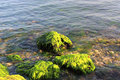 Green algaes over rocks at the coastline Stock Photography