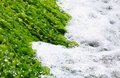 Green algas and sea foam Royalty Free Stock Photography
