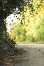 Green alley Stock Image