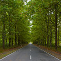 Green alley countryside road background Stock Photo