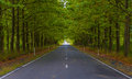 Green alley sesaonal nature background Royalty Free Stock Photo