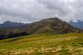 The green alpine pastures at Ali Bugyal Royalty Free Stock Photo
