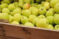 Green apple bin apples at a farmer s market Royalty Free Stock Image