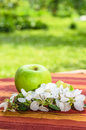 Green apple with a branch of a blossoming apple tree Stock Images