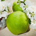 Green apple with branch of a blossoming apple tree Royalty Free Stock Photos