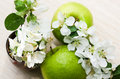 Green apple with branch of a blossoming apple tree Stock Photography