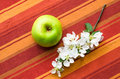Green apple with a branch a blossoming apple tree of Royalty Free Stock Photo