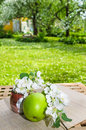 Green apple with a branch of a blossoming apple tree on a table in garden Stock Photo